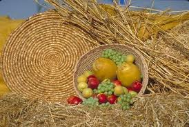Shavuot: Let's keep it the harvest holiday it was originally meant to be!